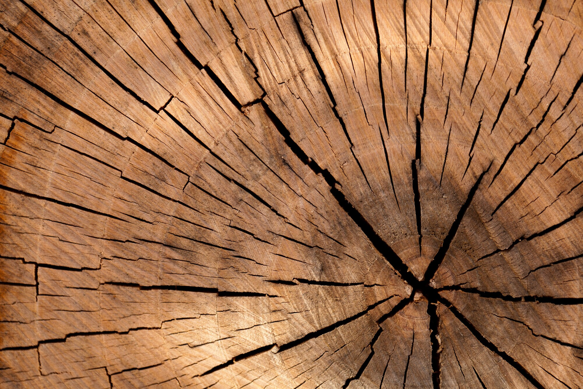 high lumber prices caused from shortage of lumber