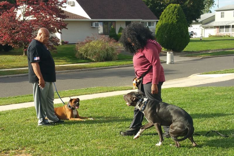 image-asa-training-with-dog-and-person