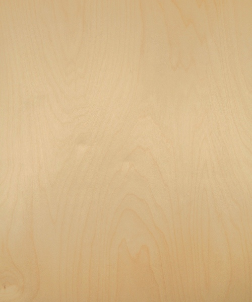 White birch wood veneer sample, rotary cut whole
