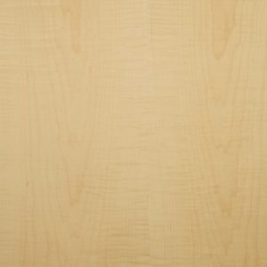 Curly maple wood veneer sample, medium figure