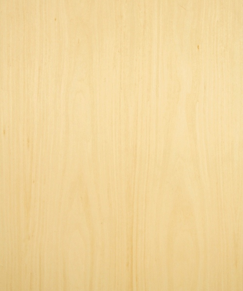 Reconstituted maple wood veneer sample, flat cut